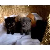 Gatos Persa !! Mascotashome !!