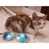 Gatitos En Adopción Con Cuota De Recuperación Gatos