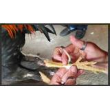 Manual De El Arte De Preparar Y Entrenar Gallos De Combate