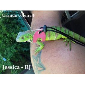 Coleira Sagui,iguana,chinchila Porquinho Da Índia, Hamster