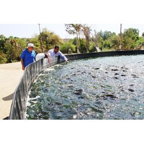 Proyecto ganado de engorda en mercado libre m xico for Proyecto de tilapia en estanques