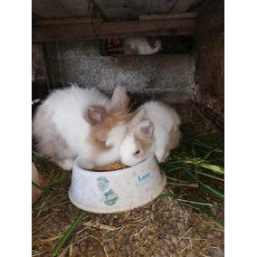 Conejos Angora. Ciudad Quesada. 87561002