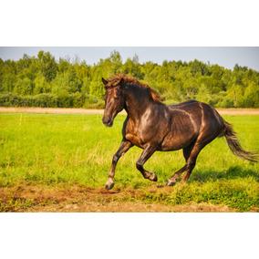 Cavalos 3 Dvds - Monty Roberts + Rédeas + Casqueamento