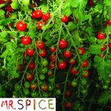 200 Sementes De Tomate Cereja Samambaia Original P/ Mudas