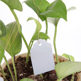 100 Und - Placa Identificador Planta Horta Orquídea Mudas