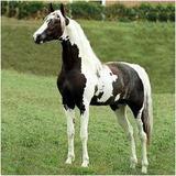 Cavalos 3 Dvd´s - Monty Roberts + Redeas + Casqueamento Fvc