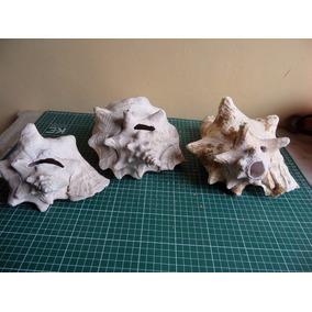 Caracoles Concha De Mar Antiguos