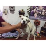 Perrita Cachorra Esterilizada En Adopción Responsable.