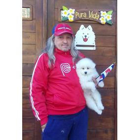 Excelentes Cachorros Samoyedos Con Pedigrí Internacional