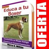 Guía De Entrenamiento Para Perro Boxer 1