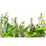 Plantas Medicinales Deshidratadas Capsulas, A Granel, Gotas
