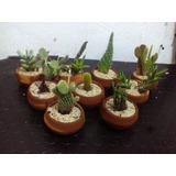 Recuerdos De Bautizo Con Cactus.Recuerdos Bautizo Puebla Plantas Plantas Suculenta En
