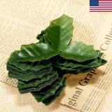 Estados Unidos Stock 50pcs Artificial Verde Flor Hojas -0813