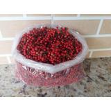 Aroeira Vermelha (pimenta Rosa)