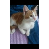 Se Dan En Adopción Responsable Gatitos De 2 Meses