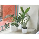 Plantas De Interior Para Oficinas - Todo para Jardines y Exteriores ...