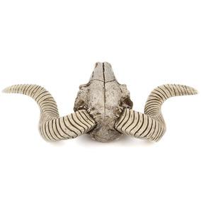 3d Animal De La Fauna Garra Cráneo Pared Colgante Montado C