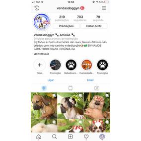Instagram Vendasdog Enviamos Filhotes Para Todo Brasil