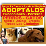 Gratis, Adopta Perros Y Gatos, Criollos, Adultos Y Grandes