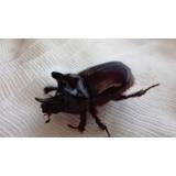 Vendo Escarabajos