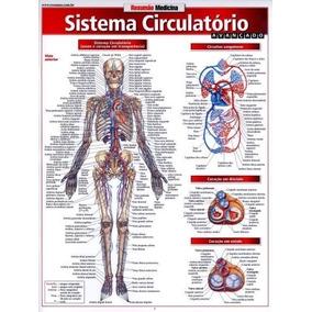Mapa Livro Sistema Circulatório Gatilho Ilustrado Colorido