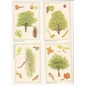 Dams Árvores Venezuela Floresta Cartão Postal Flora