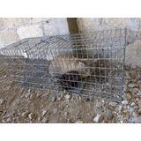 Trampa Para Animales Medianos 32x32x82 Cm