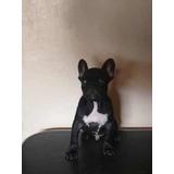 Cachorrito Bulldog Francés 4 Meses 1500 Peras Verdes