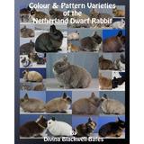 Variedad De Colores Y Patrones Del Conejo Enano Holandés