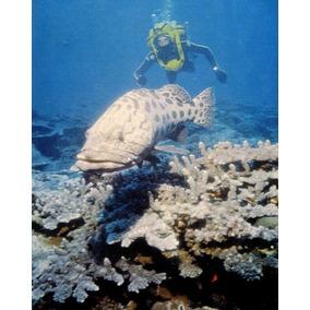 A Vida E A Morte Dos Corais - Ilustrado J Y Custeau - L.2035