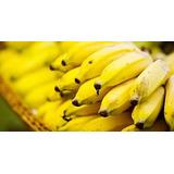 Mudas De Banana Prata Comum Orgânica