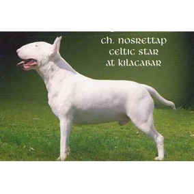 Cachorros Bull Terrier, Disponibles C/fca 3001763