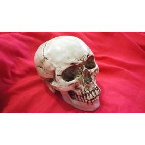 Modelo Resina Cráneo Figura Cabeza Decoración Santa Muerte