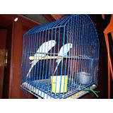 Pareja De Aves Catas