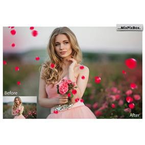 Petalas De Rosas Cores