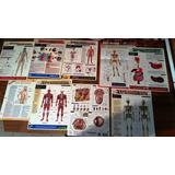 Afiches Poster Fichas Medicina Salud Anatomia Oferta
