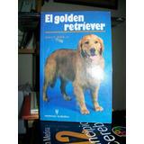 El Golden Retrevier Walsh
