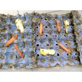 Millar De Grillos Alimento Vivo Para Reptiles