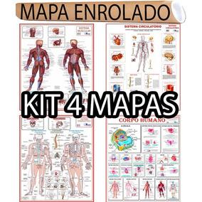 Kit 4 Mapa Corpo Humano Muscular Circulatório Esqueletico