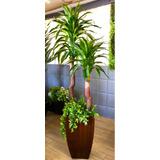 Planta Artificial Yuka Con Base