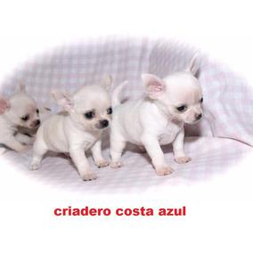 Perros De Raza Chihuahua En Mercado Libre Argentina