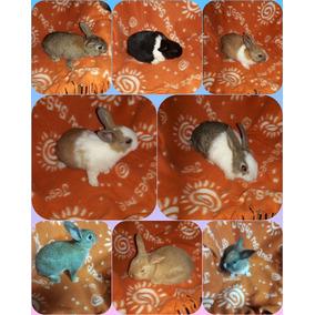 Conejos Enanos Crillos Estan Pequenos Tien Mes Y Medio