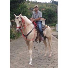 Cavalo Garanhão Mangalarga, 6 Anos, Baio Amarilho Lindo !