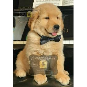 Cachorros Golden Perros De Raza En Mercado Libre Argentina