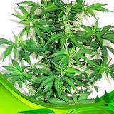 Sustrato Verde Organico Peat Moss Perlita Polvo Coco 100lts