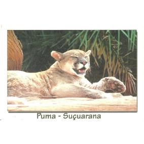 Cartão Postal Puma - Suçuarana Onça Parda, Suçuarana