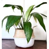 Canasta/maceta Vietnamita Flexible Seagrass Grande 35cm