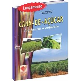 Cana-de-açúcar: Do Plantio À Colheita
