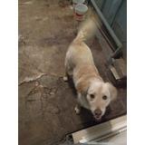 Lindo Perro En Adopcion De 1 Año
