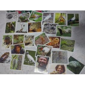 25 Figurinhas Album Selvagem Ao Extremo Richard Rasmussen